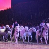 HOP TOP SHOW EQUITANA 2017 - фото IMG_2094_wm_resize-200x200, главная События Фото , конный журнал EquiLIfe