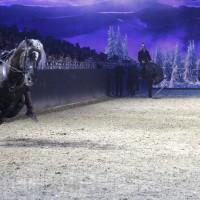 HOP TOP SHOW EQUITANA 2017 - фото IMG_2145_wm_resize-200x200, главная События Фото , конный журнал EquiLIfe