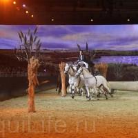 HOP TOP SHOW EQUITANA 2017 - фото IMG_2249_wm_resize-200x200, главная События Фото , конный журнал EquiLIfe