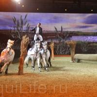 HOP TOP SHOW EQUITANA 2017 - фото IMG_2260_wm_resize-200x200, главная События Фото , конный журнал EquiLIfe
