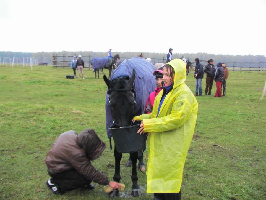 Дистанционные конные пробеги - фото PIC_1195, главная Разное Тренинг , конный журнал EquiLIfe