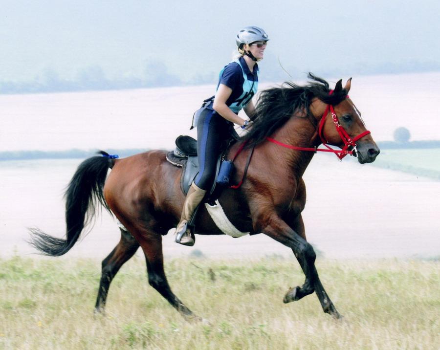 Дистанционные конные пробеги - фото bahrain101_com, главная Разное Тренинг , конный журнал EquiLIfe