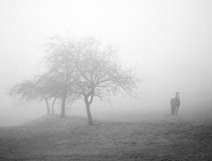 Бизнес на жалости. Одна живая история - фото horse_in_fog_by_jfphotography-d35hk2h, главная Конные истории Разное , конный журнал EquiLIfe
