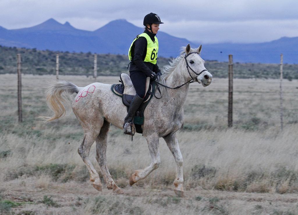 Дистанционные конные пробеги - фото mg_9187, главная Разное Тренинг , конный журнал EquiLIfe