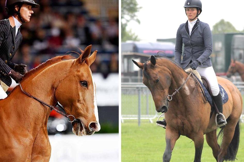 Необычный кожаный трензель - фото , главная Здоровье лошади Тренинг , конный журнал EquiLIfe