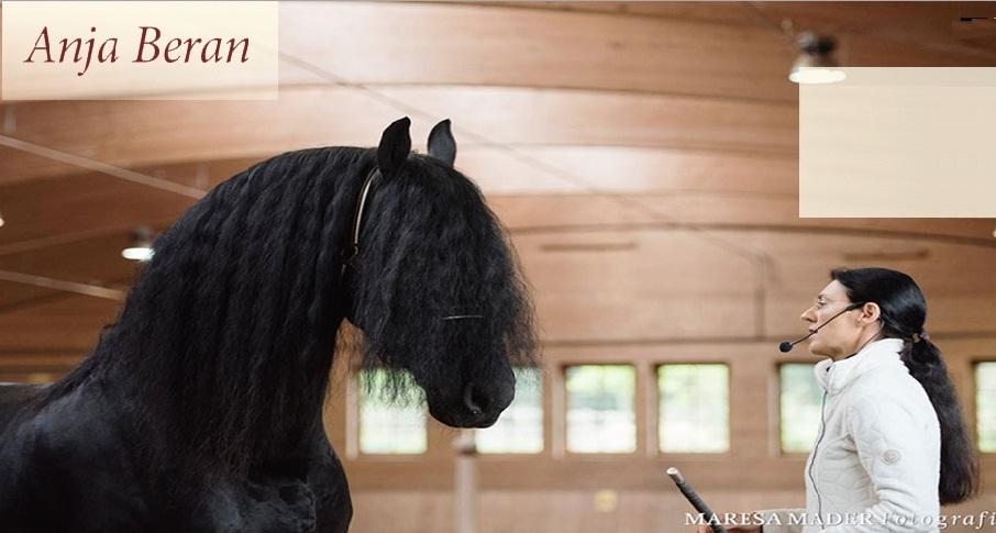 Как попасть на семинар Ани Беран (интервью с участником) - фото , главная Разное , конный журнал EquiLIfe