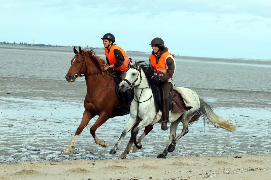 Выбор лошади для дистанционных конных пробегов - фото 1223, главная Разное Тренинг , конный журнал EquiLIfe