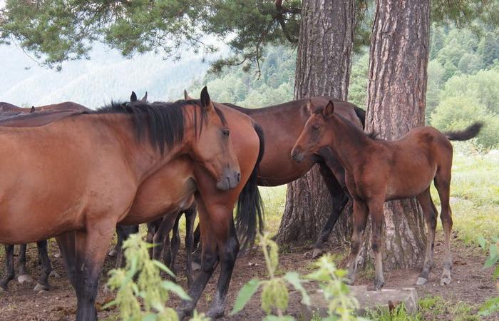 Нужна ли лошади конюшня? - фото 456, главная Содержание лошади , конный журнал EquiLIfe