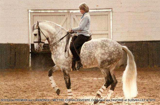 Cеминар классической выездки с Helen Arianoff - фото 4OTWIF9t5gc, главная Новости Тренинг , конный журнал EquiLIfe