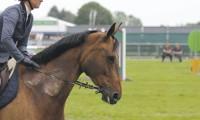 Фото: horseandhound.co.uk