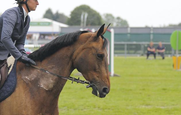 Необычный кожаный трензель - фото IMG_9000, главная Здоровье лошади Тренинг , конный журнал EquiLIfe