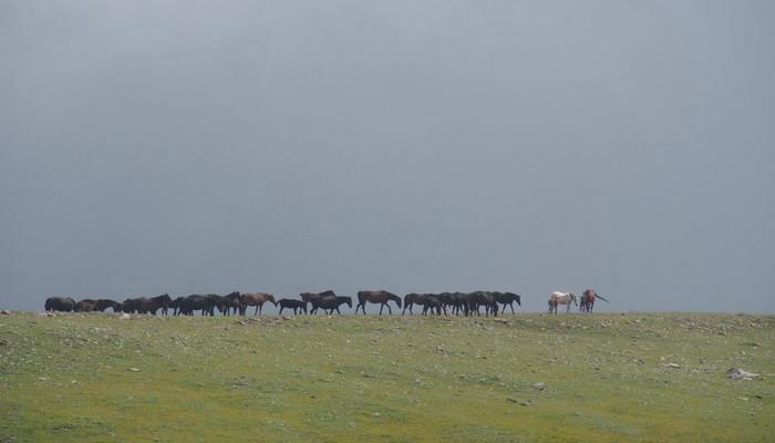 Нужна ли лошади конюшня? - фото P7260726, главная Содержание лошади , конный журнал EquiLIfe