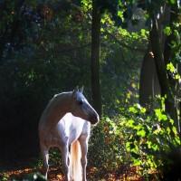 Фотограф Катаржина Окрещик-Миколаек (Katarzyna Okrzesik-Mikolajek) - фото 12-200x200, главная Интересное о лошади Фото , конный журнал EquiLIfe