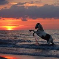 Фотограф Катаржина Окрещик-Миколаек (Katarzyna Okrzesik-Mikolajek) - фото 123-200x200, главная Интересное о лошади Фото , конный журнал EquiLIfe