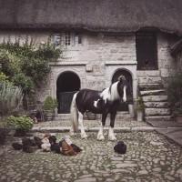 Фотограф Катаржина Окрещик-Миколаек (Katarzyna Okrzesik-Mikolajek) - фото 13-200x200, главная Интересное о лошади Фото , конный журнал EquiLIfe