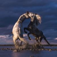 Фотограф Катаржина Окрещик-Миколаек (Katarzyna Okrzesik-Mikolajek) - фото 147-200x200, главная Интересное о лошади Фото , конный журнал EquiLIfe