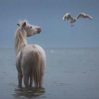 Фотограф Катаржина Окрещик-Миколаек (Katarzyna Okrzesik-Mikolajek) - фото 154-200x200, главная Интересное о лошади Фото , конный журнал EquiLIfe