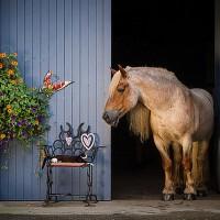 Фотограф Катаржина Окрещик-Миколаек (Katarzyna Okrzesik-Mikolajek) - фото 156-200x200, главная Интересное о лошади Фото , конный журнал EquiLIfe