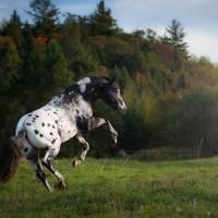 Фотограф Катаржина Окрещик-Миколаек (Katarzyna Okrzesik-Mikolajek) - фото 17-200x200, главная Интересное о лошади Фото , конный журнал EquiLIfe