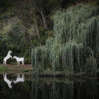 Фотограф Катаржина Окрещик-Миколаек (Katarzyna Okrzesik-Mikolajek) - фото 19-200x200, главная Интересное о лошади Фото , конный журнал EquiLIfe