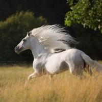 Фотограф Катаржина Окрещик-Миколаек (Katarzyna Okrzesik-Mikolajek) - фото 199-200x200, главная Интересное о лошади Фото , конный журнал EquiLIfe