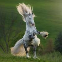 Фотограф Катаржина Окрещик-Миколаек (Katarzyna Okrzesik-Mikolajek) - фото 258-200x200, главная Интересное о лошади Фото , конный журнал EquiLIfe