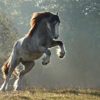 Фотограф Катаржина Окрещик-Миколаек (Katarzyna Okrzesik-Mikolajek) - фото 428521086f1ca961b2d18190f7a39537-200x200, главная Интересное о лошади Фото , конный журнал EquiLIfe