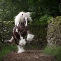 Фотограф Катаржина Окрещик-Миколаек (Katarzyna Okrzesik-Mikolajek) - фото 51-200x200, главная Интересное о лошади Фото , конный журнал EquiLIfe