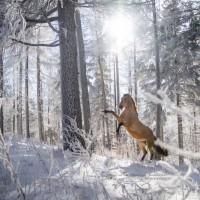 Фотограф Катаржина Окрещик-Миколаек (Katarzyna Okrzesik-Mikolajek) - фото 56-200x200, главная Интересное о лошади Фото , конный журнал EquiLIfe