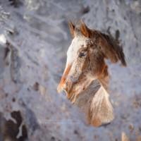 Фотограф Катаржина Окрещик-Миколаек (Katarzyna Okrzesik-Mikolajek) - фото 57-200x200, главная Интересное о лошади Фото , конный журнал EquiLIfe