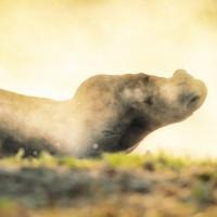 Фотограф Катаржина Окрещик-Миколаек (Katarzyna Okrzesik-Mikolajek) - фото 5807-200x200, главная Интересное о лошади Фото , конный журнал EquiLIfe