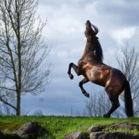 Фотограф Катаржина Окрещик-Миколаек (Katarzyna Okrzesik-Mikolajek) - фото 59-200x200, главная Интересное о лошади Фото , конный журнал EquiLIfe