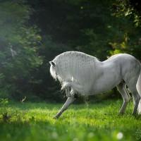 Фотограф Катаржина Окрещик-Миколаек (Katarzyna Okrzesik-Mikolajek) - фото 78-200x200, главная Интересное о лошади Фото , конный журнал EquiLIfe