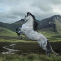 Фотограф Катаржина Окрещик-Миколаек (Katarzyna Okrzesik-Mikolajek) - фото 79-200x200, главная Интересное о лошади Фото , конный журнал EquiLIfe