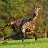 Фотограф Катаржина Окрещик-Миколаек (Katarzyna Okrzesik-Mikolajek) - фото 98-200x200, главная Интересное о лошади Фото , конный журнал EquiLIfe