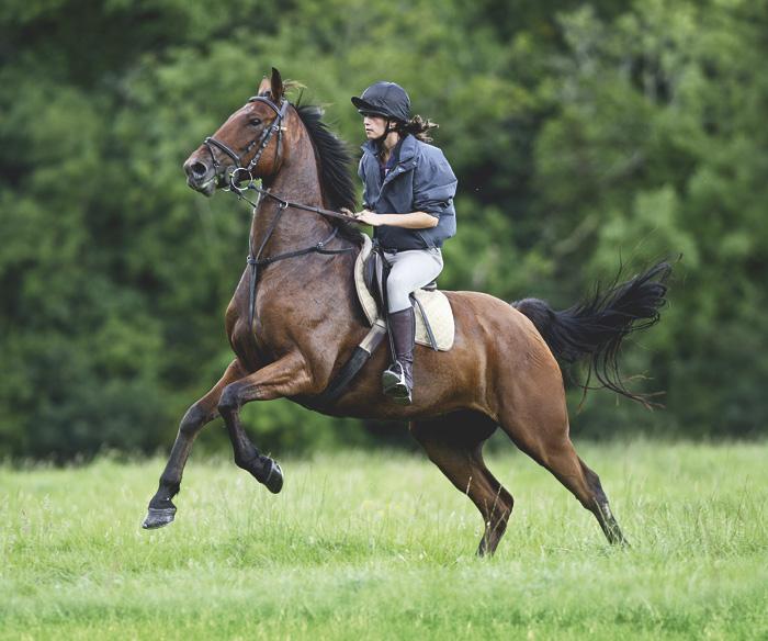 Уступка давлению при обучении лошади - фото CAV-04_2010_Reiten-im-Gelaende_10, главная Тренинг , конный журнал EquiLIfe