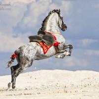 Фотограф Катаржина Окрещик-Миколаек (Katarzyna Okrzesik-Mikolajek) - фото c76d80f8-200x200, главная Интересное о лошади Фото , конный журнал EquiLIfe
