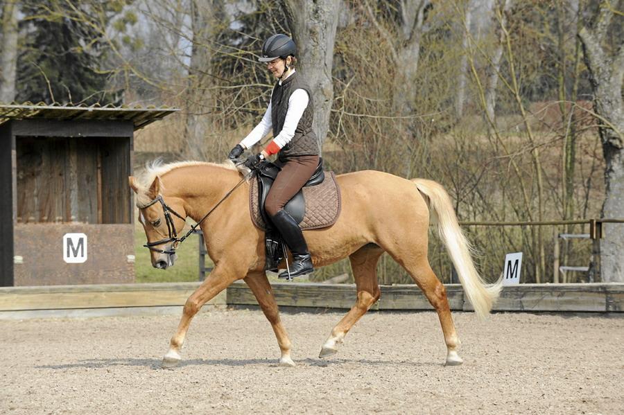 Уступка давлению при обучении лошади - фото cav-stimmung-lir2811-sicherer-reiter-unsicheres-pferd, главная Тренинг , конный журнал EquiLIfe
