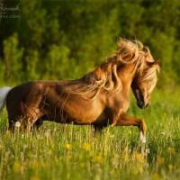 Фотограф Катаржина Окрещик-Миколаек (Katarzyna Okrzesik-Mikolajek) - фото i-200x200, главная Интересное о лошади Фото , конный журнал EquiLIfe