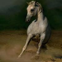 Фотограф Войтек Квятковский (Wojtek Kwiatkowski) - фото 0_1267c_74437393_XL-200x200, главная Фото , конный журнал EquiLIfe