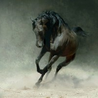 Фотограф Войтек Квятковский (Wojtek Kwiatkowski) - фото 0_271c0_7bffe1e2_XL-200x200, главная Фото , конный журнал EquiLIfe