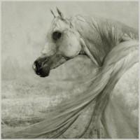 Фотограф Войтек Квятковский (Wojtek Kwiatkowski) - фото 0_271c2_1dc2432e_XL-200x200, главная Фото , конный журнал EquiLIfe