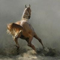 Фотограф Войтек Квятковский (Wojtek Kwiatkowski) - фото 0_271c5_c4585cd1_XL-200x200, главная Фото , конный журнал EquiLIfe