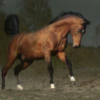 Фотограф Войтек Квятковский (Wojtek Kwiatkowski) - фото 0_271cb_add3c604_XL-200x200, главная Фото , конный журнал EquiLIfe