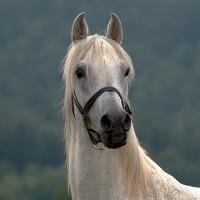 Фотограф Войтек Квятковский (Wojtek Kwiatkowski) - фото 0_271d5_ac427133_XL-200x200, главная Фото , конный журнал EquiLIfe