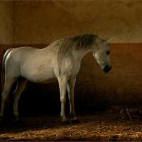 Фотограф Войтек Квятковский (Wojtek Kwiatkowski) - фото 0_271e7_7c1b5134_XL-200x200, главная Фото , конный журнал EquiLIfe