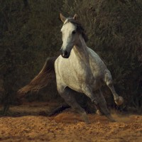 Фотограф Войтек Квятковский (Wojtek Kwiatkowski) - фото 0_271e9_fcb5db63_XL-200x200, главная Фото , конный журнал EquiLIfe