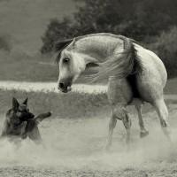 Фотограф Войтек Квятковский (Wojtek Kwiatkowski) - фото 0_271f2_d9a089c3_XL-200x200, главная Фото , конный журнал EquiLIfe