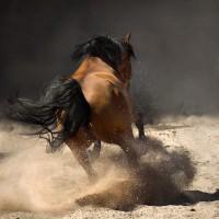Фотограф Войтек Квятковский (Wojtek Kwiatkowski) - фото 0_271f6_771a9da7_XL-200x200, главная Фото , конный журнал EquiLIfe