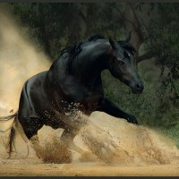 Фотограф Войтек Квятковский (Wojtek Kwiatkowski) - фото 0_27209_b7abb1d0_XL-200x200, главная Фото , конный журнал EquiLIfe